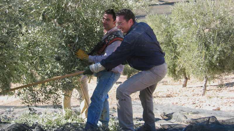 ¿Cuándo producimos el aceite de oliva?