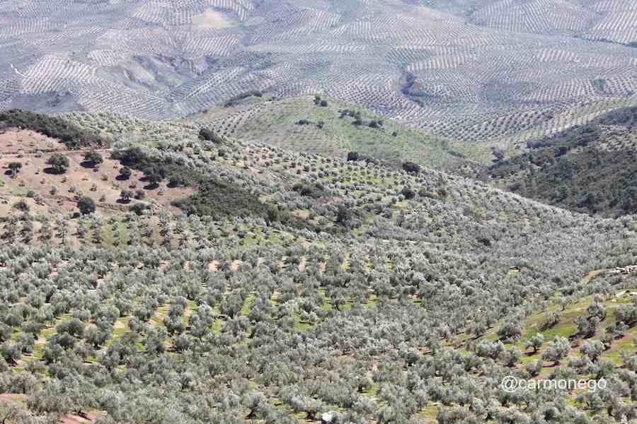 Aceite de oliva de las cumbres de Jaén