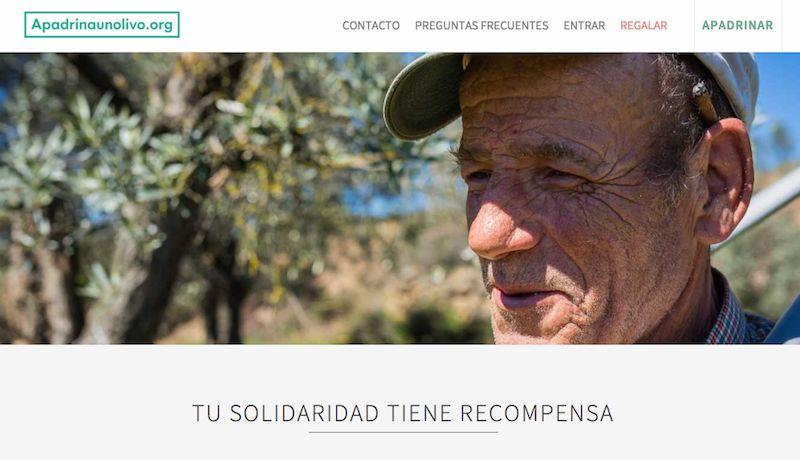 Apadrina un olivo para salvar un olivar centenario