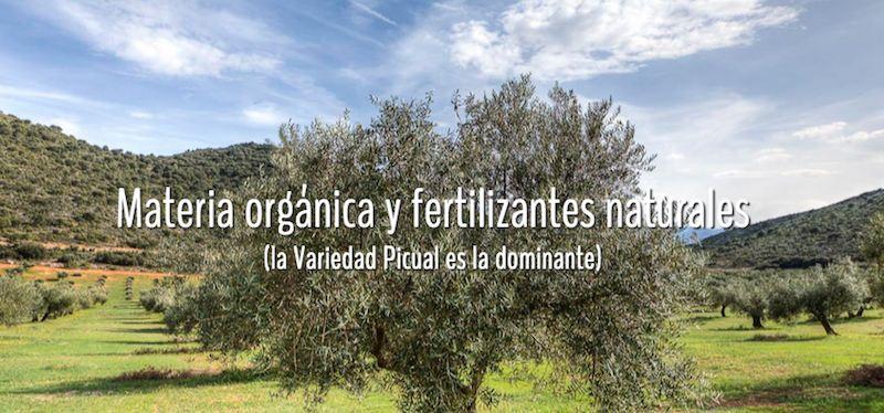 Beneficios del aceite ecológico y diferencias con el tradicional