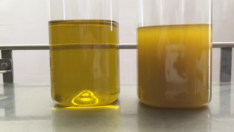 Diferencias entre aceite de oliva filtrado y sin filtrar