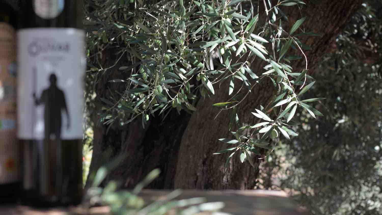 Guía del aceite de oliva