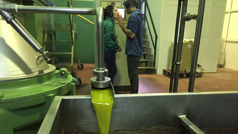 Haciendo aceite de oliva en la almazara