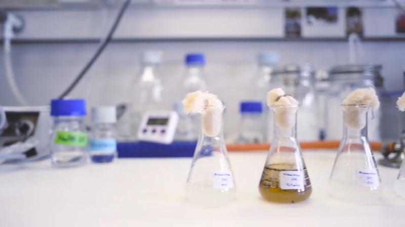 Aceite de oliva y sistema inmunitario, ¿cómo reforzar las defensas?
