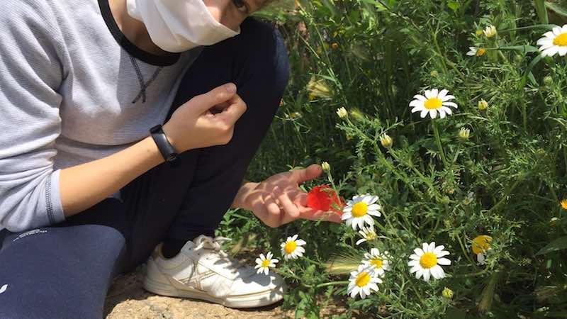 Prevenir la alergia al olivo
